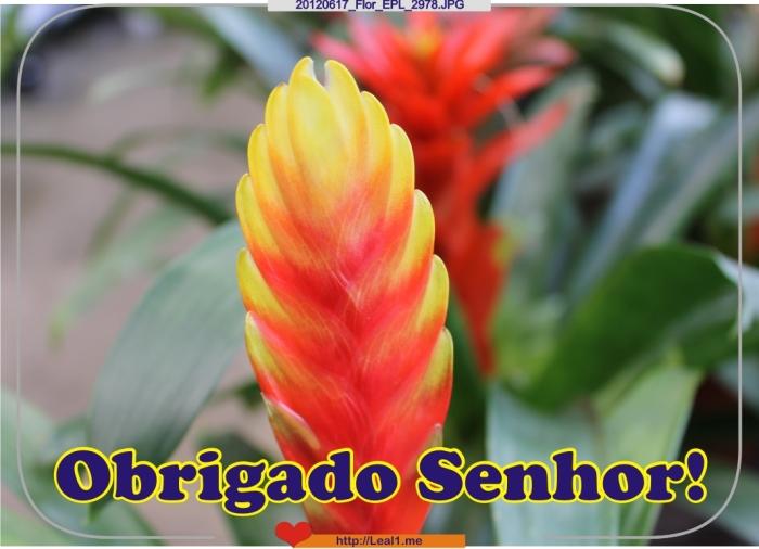 EONF_20120617_Flor_EPL_2978