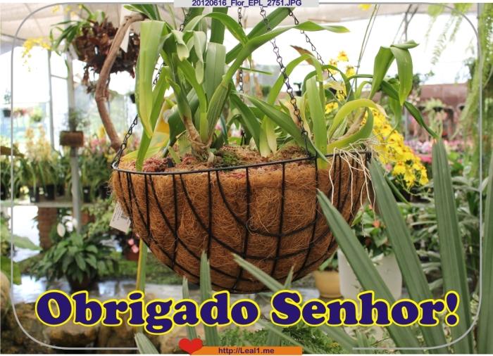 eOpP_20120616_Flor_EPL_2751
