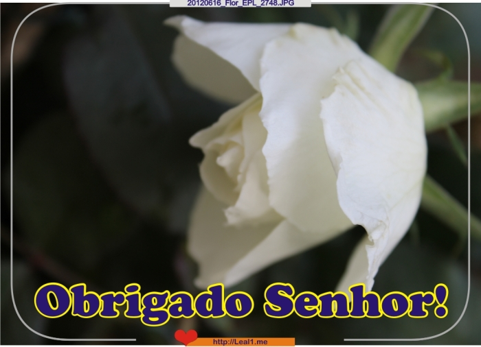 EQDz_20120616_Flor_EPL_2748