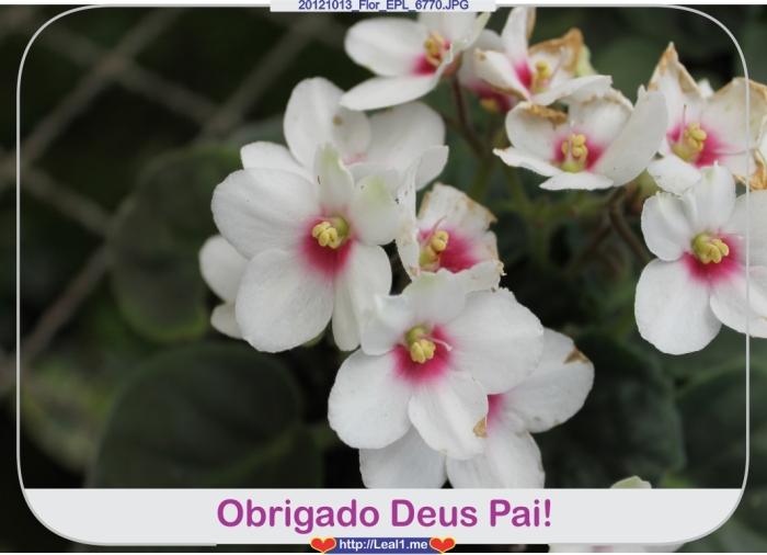 Esdx_20121013_Flor_EPL_6770