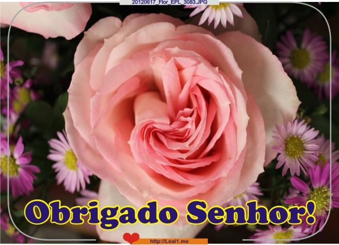 eyJQ_20120617_Flor_EPL_3083