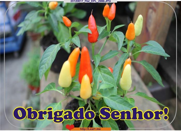 FaqR_20120617_Flor_EPL_2999