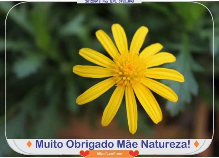 fCfD_20120918_Flor_EPL_5735