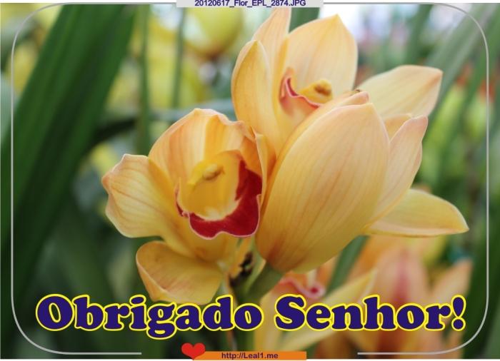 FCMb_20120617_Flor_EPL_2874