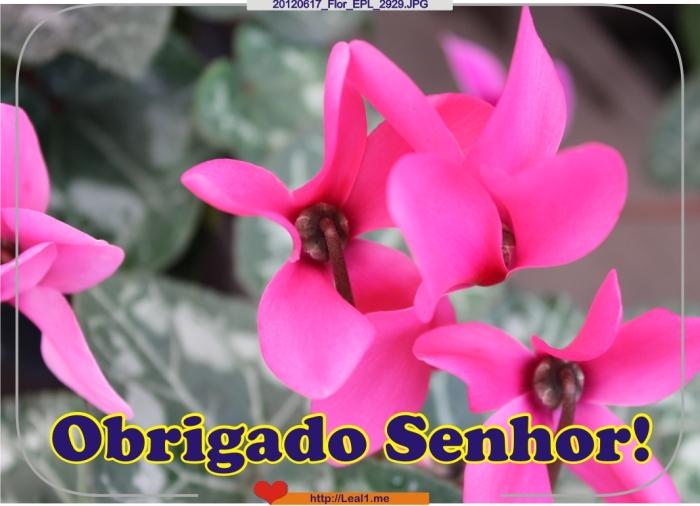 FDxj_20120617_Flor_EPL_2929