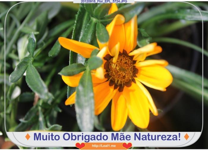 FEub_20120918_Flor_EPL_5724