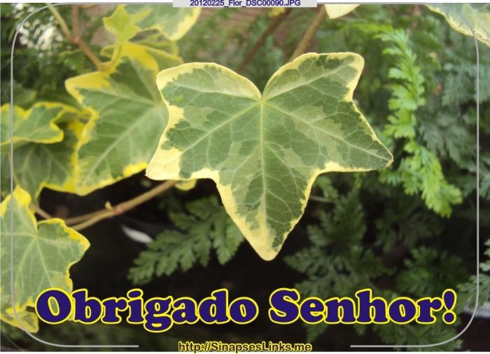 fGAP_20120225_Flor_DSC00090