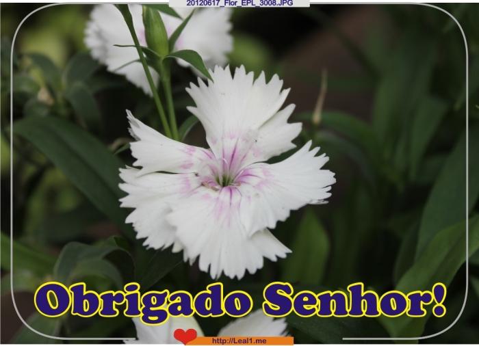 fIEp_20120617_Flor_EPL_3008