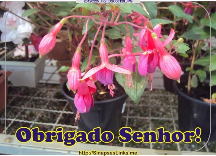 FMeC_20120225_Flor_DSC00139