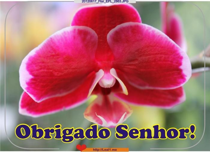 fNGq_20120617_Flor_EPL_2863