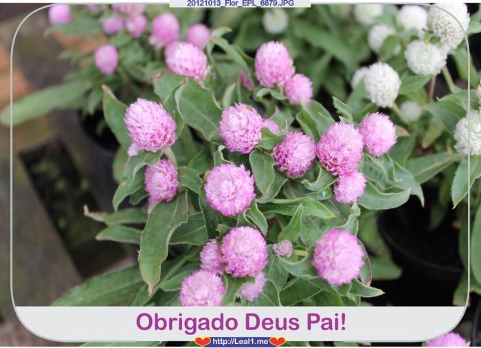fTPA_20121013_Flor_EPL_6879