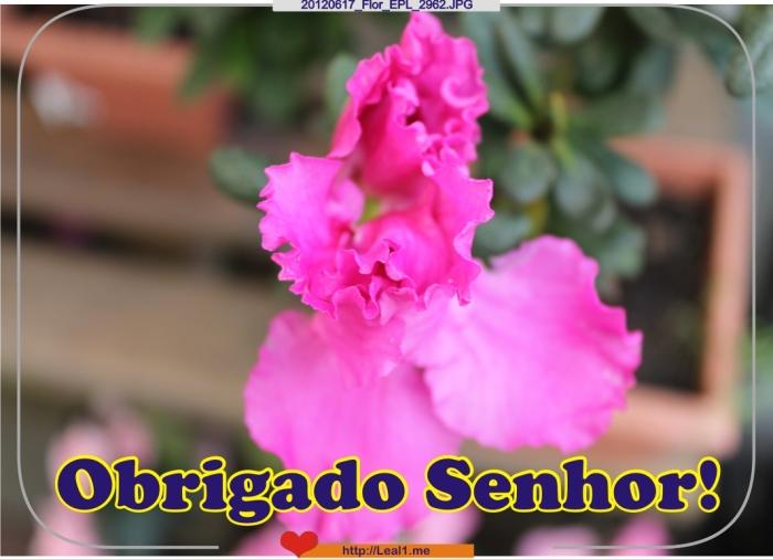 fvfr_20120617_Flor_EPL_2962
