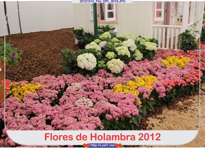 fXse_20121013_Flor_EPL_6019
