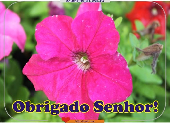 fyqm_20120616_Flor_EPL_2723