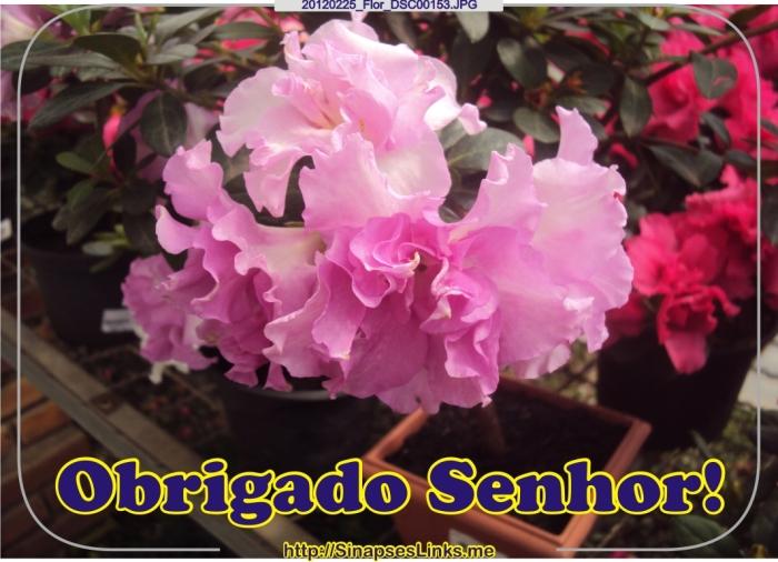 gAuA_20120225_Flor_DSC00153