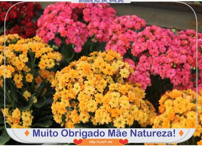 gbcE_20120918_Flor_EPL_5778