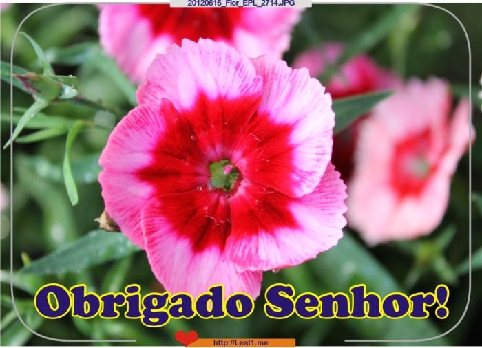 GEPs_20120616_Flor_EPL_2714