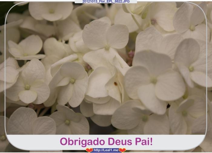 GEXr_20121013_Flor_EPL_6822