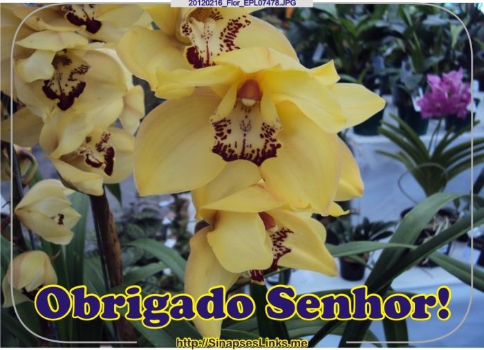 GJjB_20120216_Flor_EPL07478