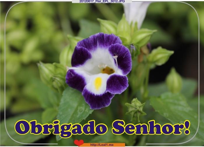 GKNy_20120617_Flor_EPL_3012
