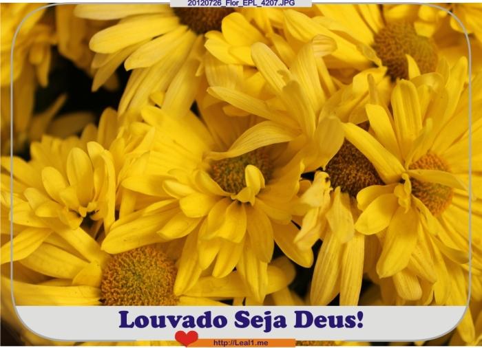 gLzG_20120726_Flor_EPL_4207