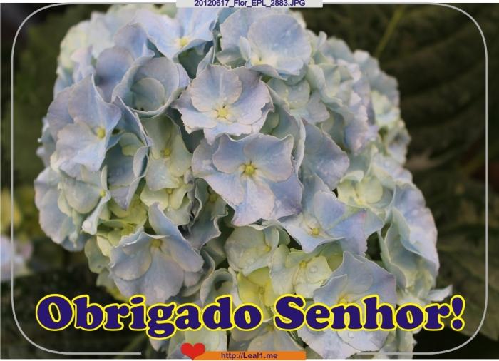 gOLz_20120617_Flor_EPL_2883