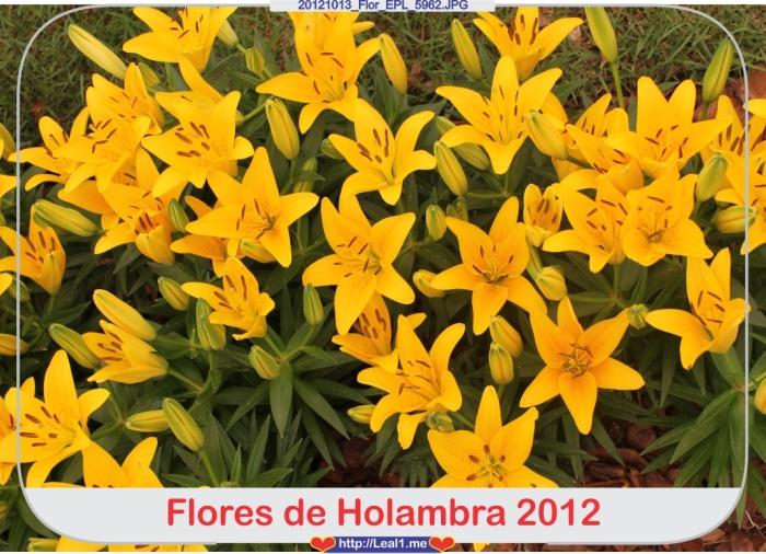 gQDU_20121013_Flor_EPL_5962
