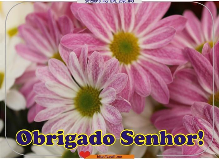 GqtQ_20120616_Flor_EPL_2695