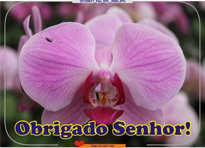 GrFx_20120617_Flor_EPL_2850