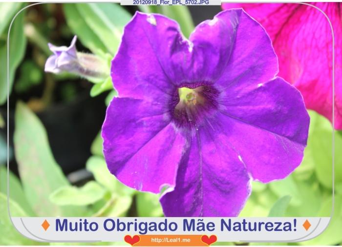 gRSt_20120918_Flor_EPL_5702