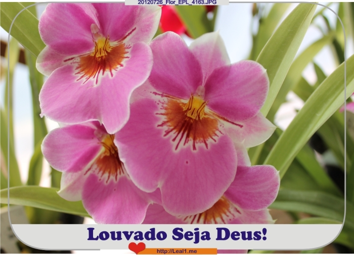 GSMV_20120726_Flor_EPL_4163