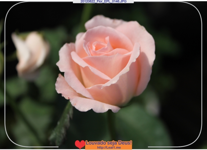 GtCi_20120822_Flor_EPL_0146