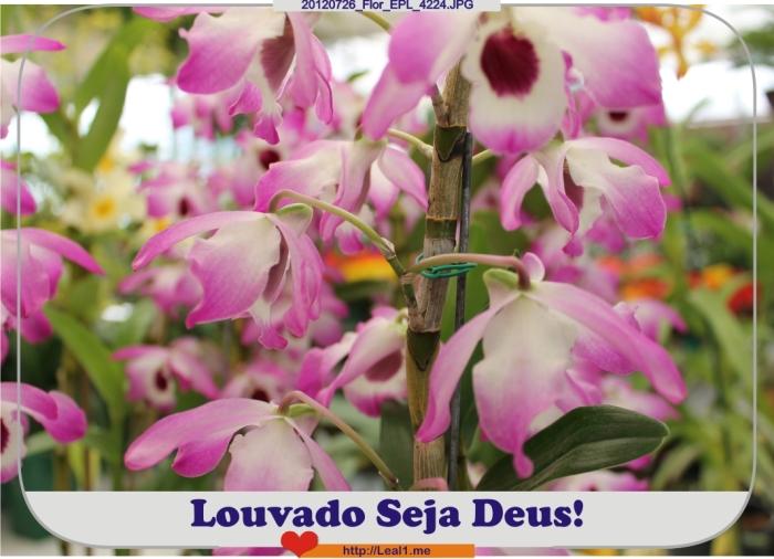 Gtno_20120726_Flor_EPL_4224