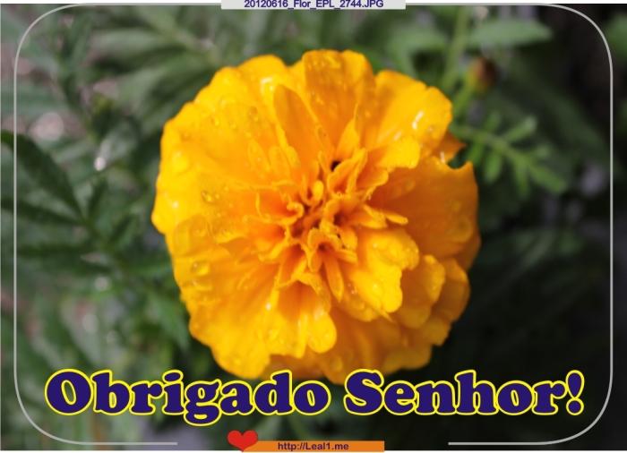 GUMY_20120616_Flor_EPL_2744
