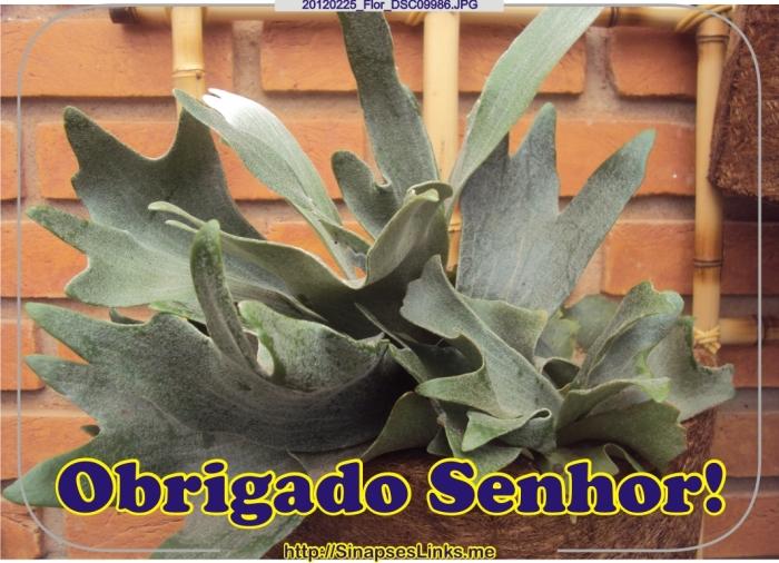 GWdn_20120225_Flor_DSC09986