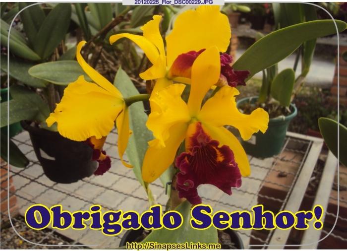 gwvo_20120225_Flor_DSC00229