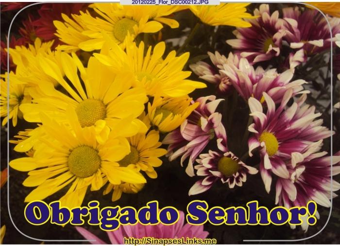 Gxqe_20120225_Flor_DSC00212