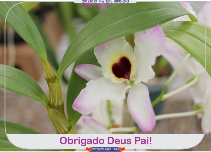 gxqn_20121013_Flor_EPL_6805