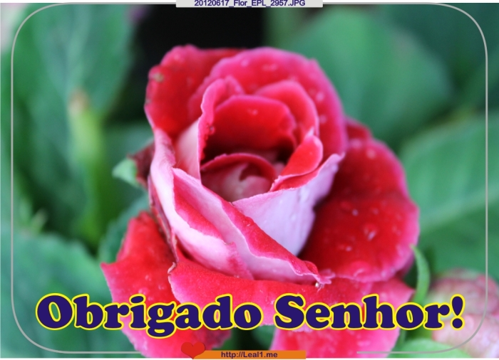 gYyd_20120617_Flor_EPL_2957