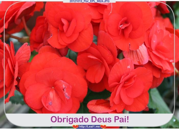 haDu_20121013_Flor_EPL_6824