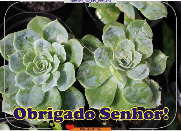 HBNC_20120616_Flor_EPL_2728