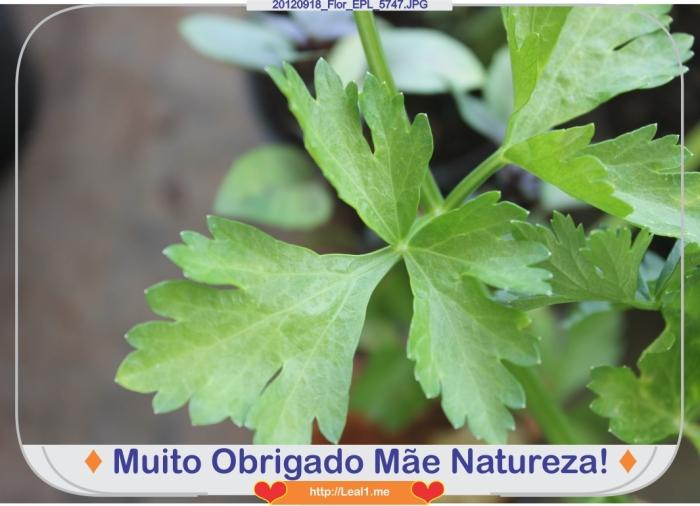 hEPr_20120918_Flor_EPL_5747