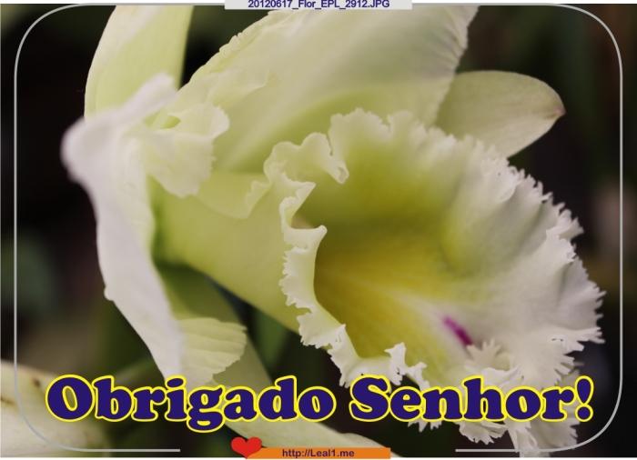 HFKa_20120617_Flor_EPL_2912