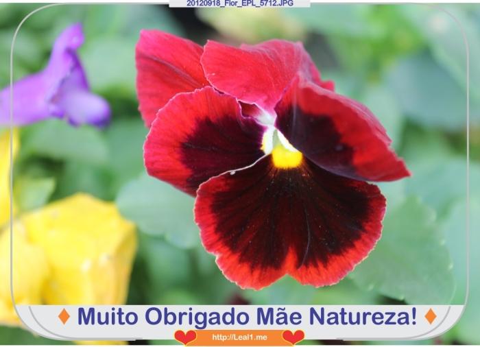 Hgih_20120918_Flor_EPL_5712