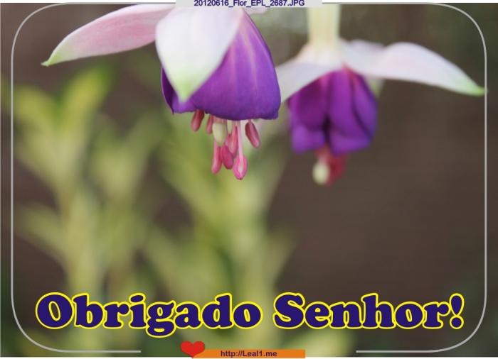 HjfK_20120616_Flor_EPL_2687