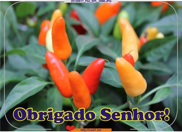 hJup_20120617_Flor_EPL_2998