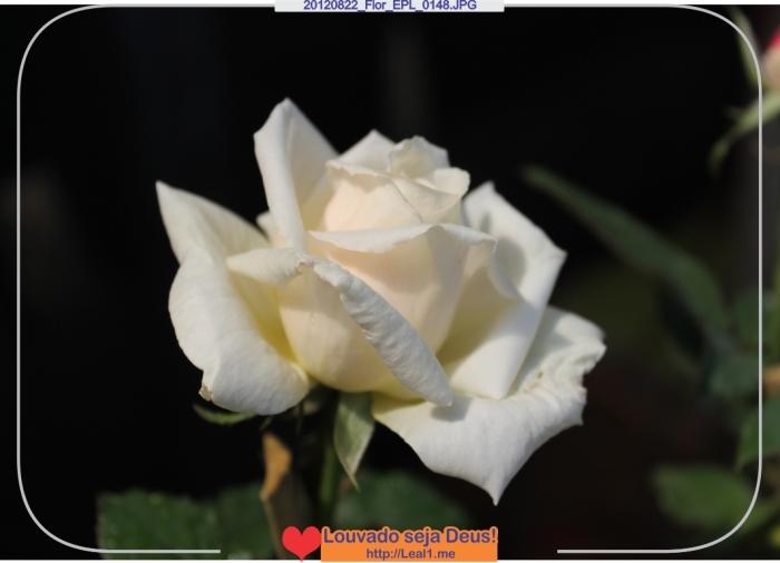 hLEB_20120822_Flor_EPL_0148
