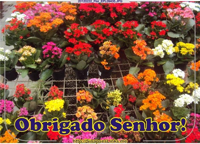 HlFq_20120222_Flor_EPL09435
