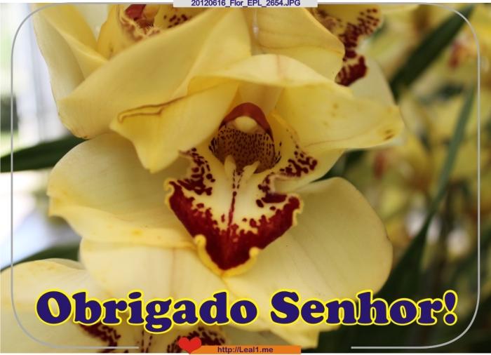 hLtQ_20120616_Flor_EPL_2654
