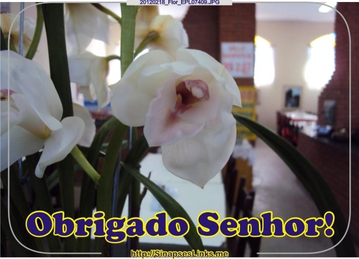 hPcs_20120218_Flor_EPL07409